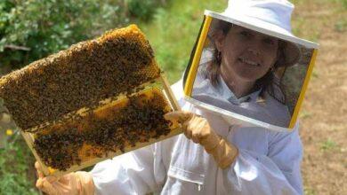 Photo of Cum poti deveni apicultor si care sunt lucrurile de care ai nevoie pentru a da startul unei afaceri in apicultura?